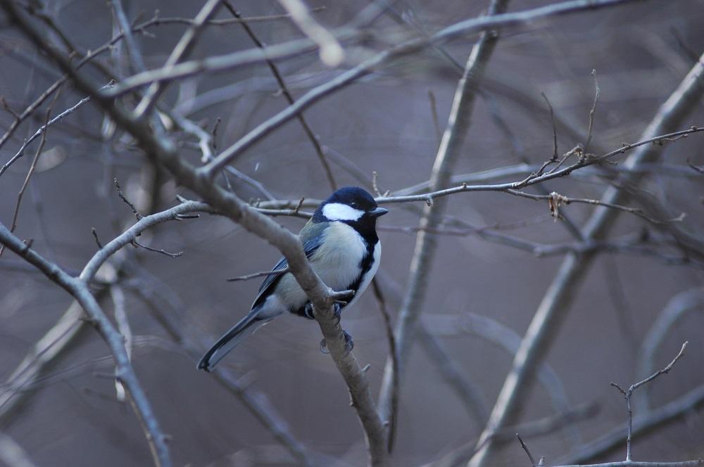 冬鳥を探せ!大年寺山公園バードウォッチング