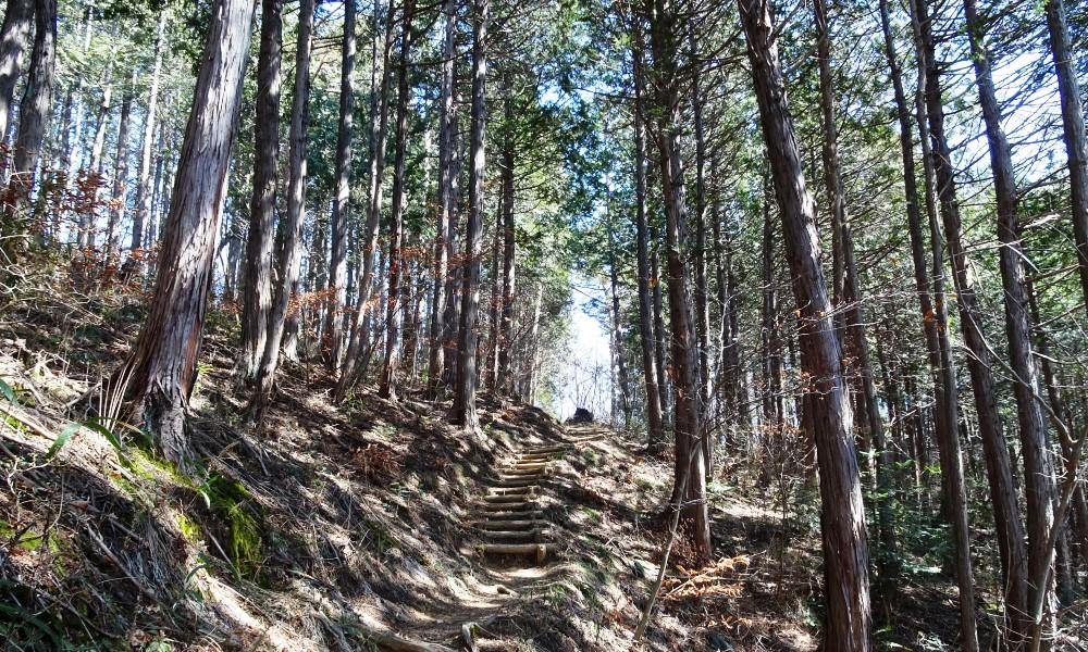 青葉の森歴史発見
