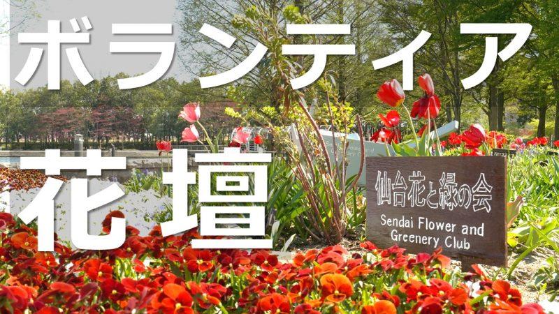 七北田公園ボランティア花壇の紹介