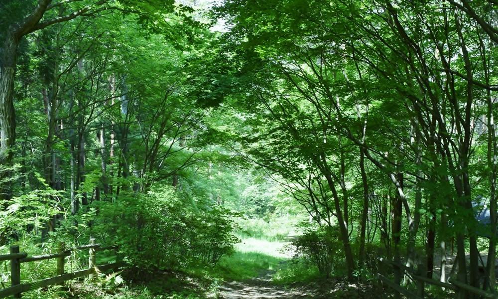 写真展「森へいこうよ♪」