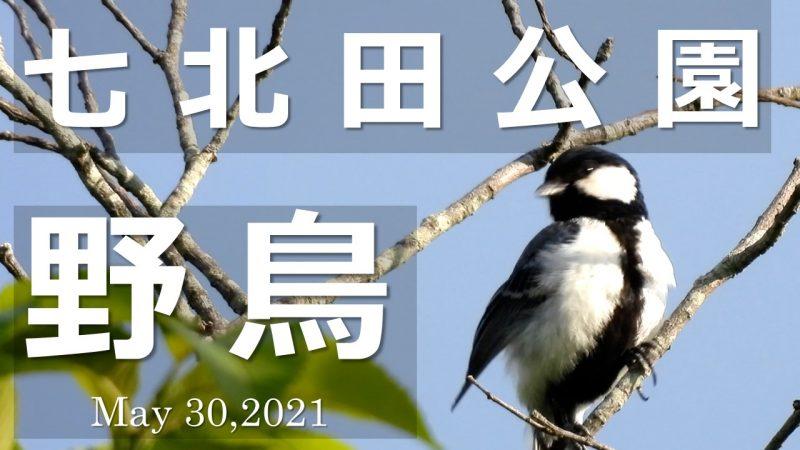 七北田公園野鳥
