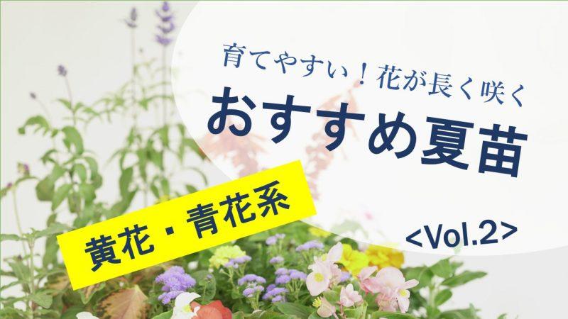 育てやすい!花が長く咲く おすすめ夏苗 Vol.2 黄色・青花系
